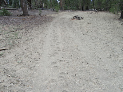 ... heading south on a dirt road.  The 2015 Harrison map shows it as a trail, but the 2010 Forest Service maps indicates that it is a closed road going to the private inholding.  There was trail running along side the road at places, but the road is the dominant feature.