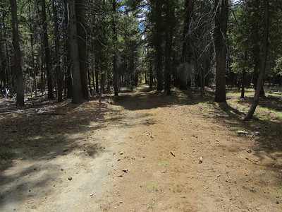 The road continued south through the pines, eventually ...