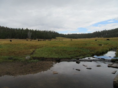... the headwaters of Ninemile Creek and a herd of range cattle in the meadow.