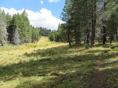 I headed up Long Canyon past some meadow areas, ...