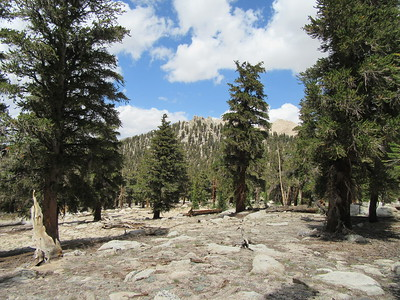 As I continued hiking back to Cottonwood Pass, I noticed this rather boring view through the pines, but with ...