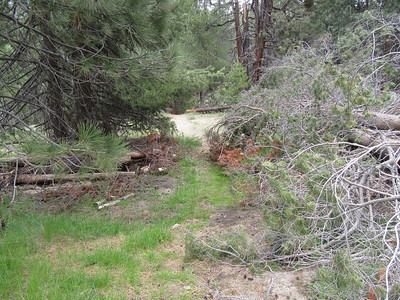 Later in the morning I headed to Little Kern Bridge, and found the first of ten blowdowns between Grey Meadow and the trail junction to Round Meadow.