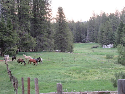 The meadow was lively the next morning with Carol's, Lynn's and Bonnie's stock.  (i.e., horses and/or mules, and don't ask me which is which.)