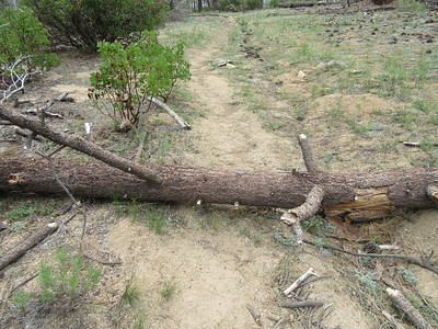 The first of ten blowdowns between the trail junction to Round Meadow and Fish Creek.