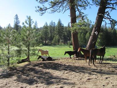 Golden Trout Wilderness -- Grey Meadow  5-17