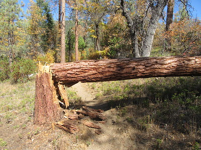 A few hundred feet from the trailhead was this blowdown across the trail, then ...