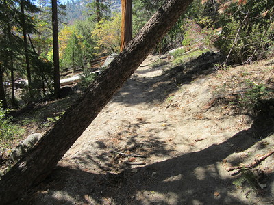 ... a mile further this more problematic one because the stock going around it on the lower side of the trail are causing the trail to erode.  Both will be included in my customary trail report to the Forest Service to help with trail maintenance.