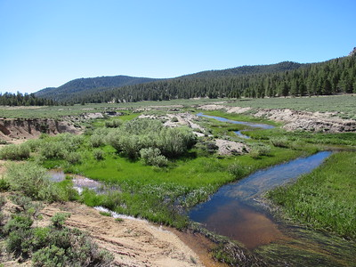 """I continued on to where the """"north fork"""" tributary (on the left) flowed into Mulkey Creek (on the right) and ..."""