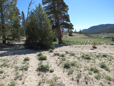 ... then forked.  The multiple ruts of the cattle trail continued to the right along the meadow, while a hikers' trial forked to the left and went up through the trees and mostly away from the meadow.  I took the cattle trail to the right/east and ...