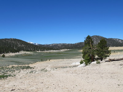 ... I arrived at the trail junction by Mulkey Meadow (9,350').  In prior years I had gone straight, toward Templeton Meadow, or to the right, toward Tunnel Meadow.  This time, however, ...