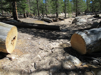 """The 2015 Tom Harrison map shows this as a """"secondary trail - infrequently maintained,"""" but it has had some recent big saw work and is in good shape at least to ..."""