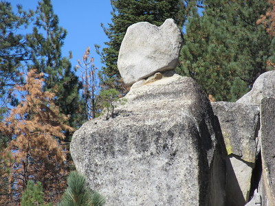 ... I saw pine tree sprouts and a rock clinging to ...