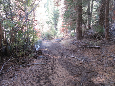 As the trail continued down through almost solid forest, ...