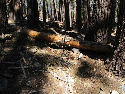 ... I filed my customary trail report with the Forest Service to help with trail and campsite maintenance.