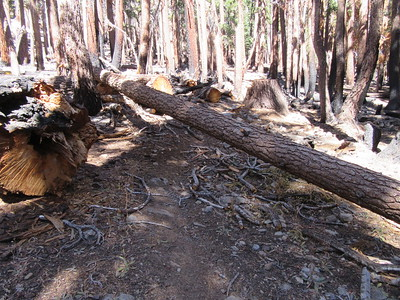 ... some of which are troublesome for stock to get around.  These were just some of the 17 total blowdowns across the trail between Summit Trailhead and Maggie Lakes.  Of course, ...