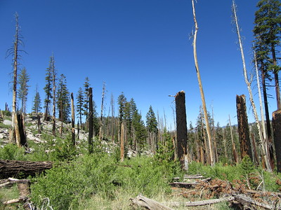 ... through an old burn area, before ...