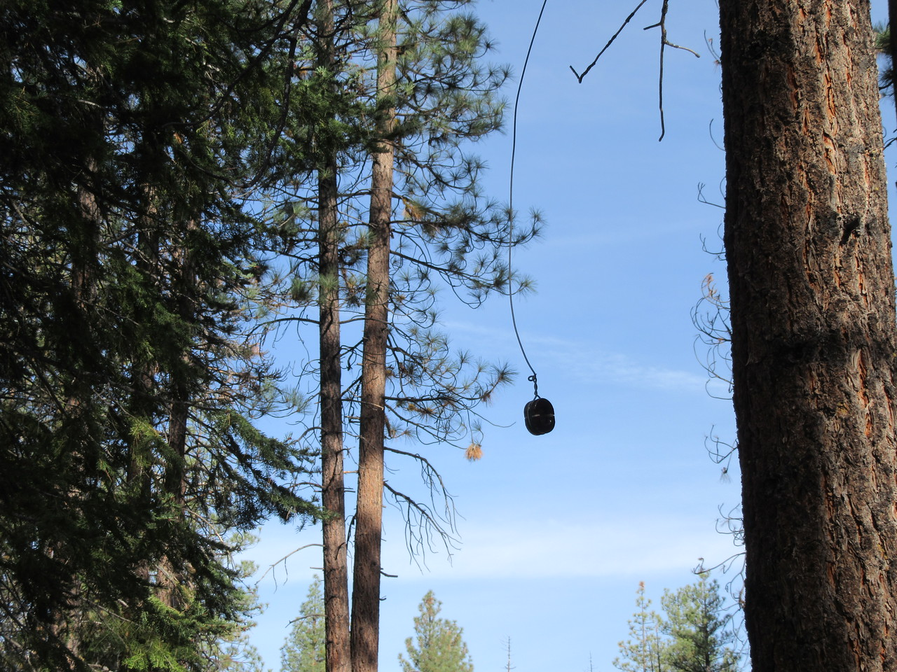 By the looks of this wire and insulator hanging from a tree by the trail, there was once telephone service at the Trout Meadow Ranger Station.