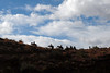 hordes of mules...
