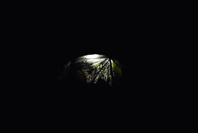 ..at night, and if you're wandering outside camp...you can see this big eyed creature....lol!...yes that's an eye...hahaha....ok not, but can you guess?