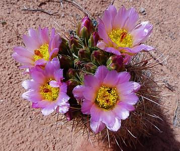 More cactus.