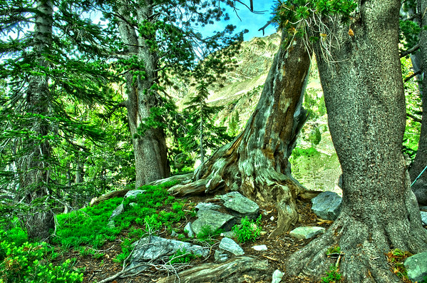 South Fork Cascade to North Fork Cascade 7/28/14