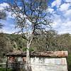 Pacheco Camp.