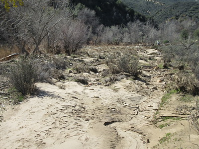 "I arrived at Bear Creek campsite and, standing on the ""big rock"" in the center of it, surveyed the results of the recent flooding through it.  Here, I looked upstream through the camping area, then ..."