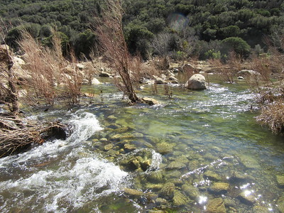 A look at the creek crossing showed the flow was deep and fast.  I knew it was wadeable here, but based on my past experience, probably not getting into Oak Flat downstream.  Therefore, ...