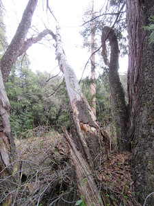 ... a view from the other side and below the creek bank.  These photos will be part of the trail report to the Forest Service to help with trail maintenance, as will the following photos of blowdowns across the trail and other trail conditions.