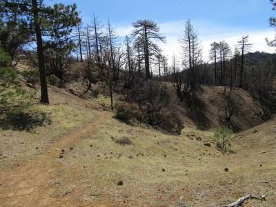... looked ahead into a burn area at the top of the Piedra Blanca Creek drainage.
