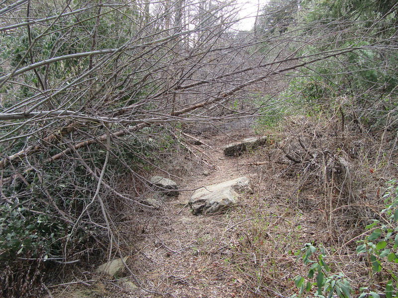This was the worst of the low hanging branches that will impede those riding stock on the trail, but there was also a lot more of it that will be a serious nuisance for any riders south of Beartrap Camp.