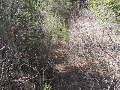 As we hiked down to Beartrap Camp, this brush encroaching over the trail was representative of numerous sections where it touched both shoulders as we walked.  The trail was still, however, always easy to find.