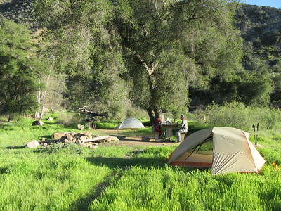 We camped one night at Oak Flat (2640'), an example of how the winter's rains have turned so much of the forest a green that has not been seen for at least four years.