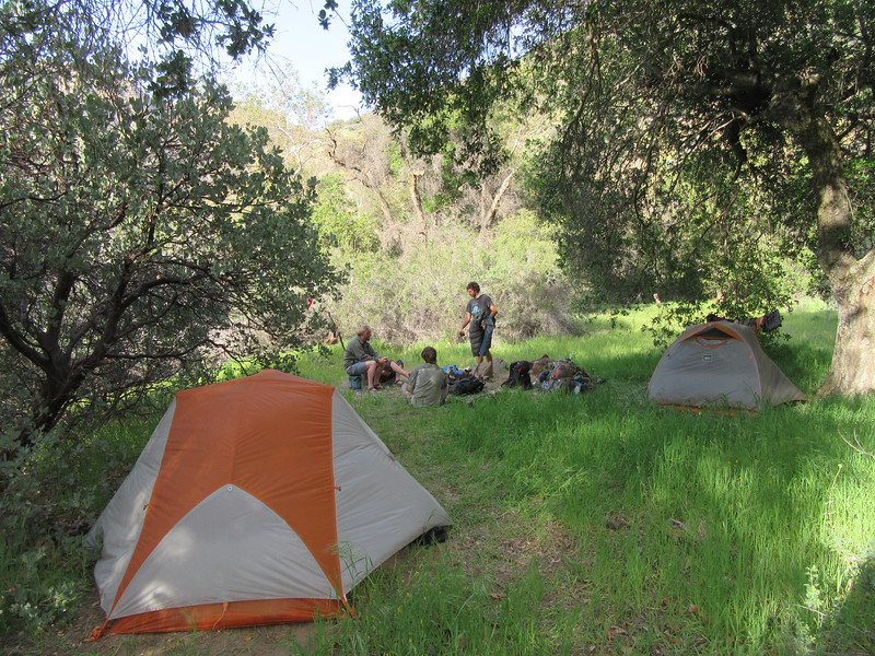 ... camped throughout the grass and trees, and ...