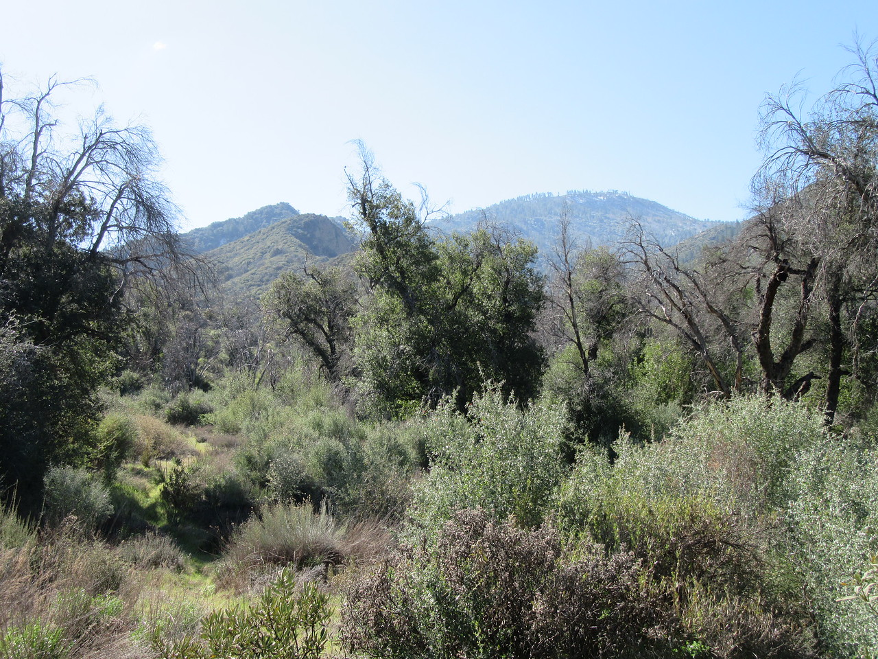 The trail was generally easy to find and follow, sometimes a little brushy, ...