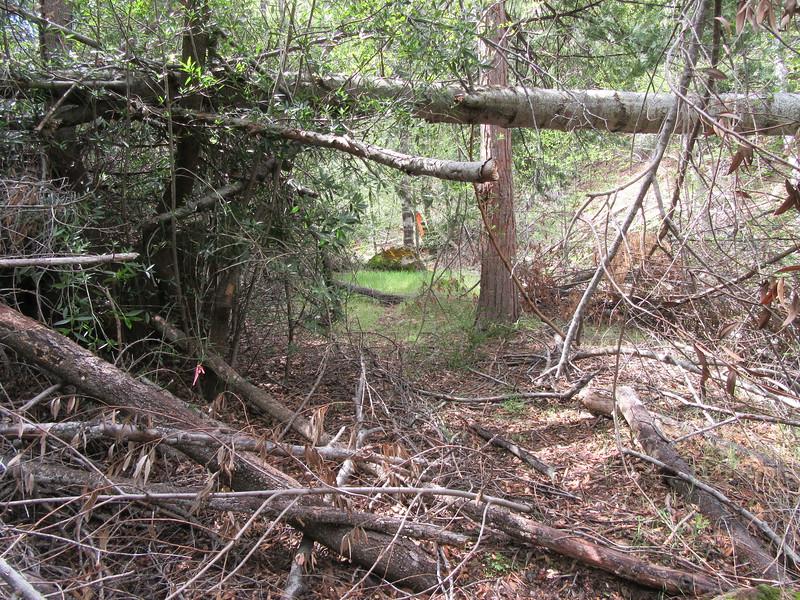 ... ducking under logs, ...
