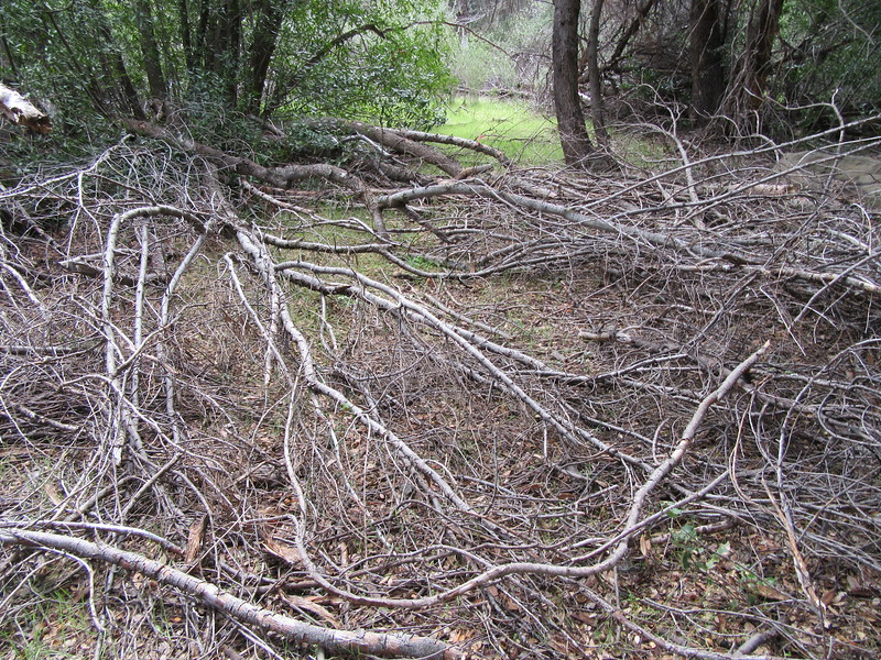 ... stumbling through branches, ...