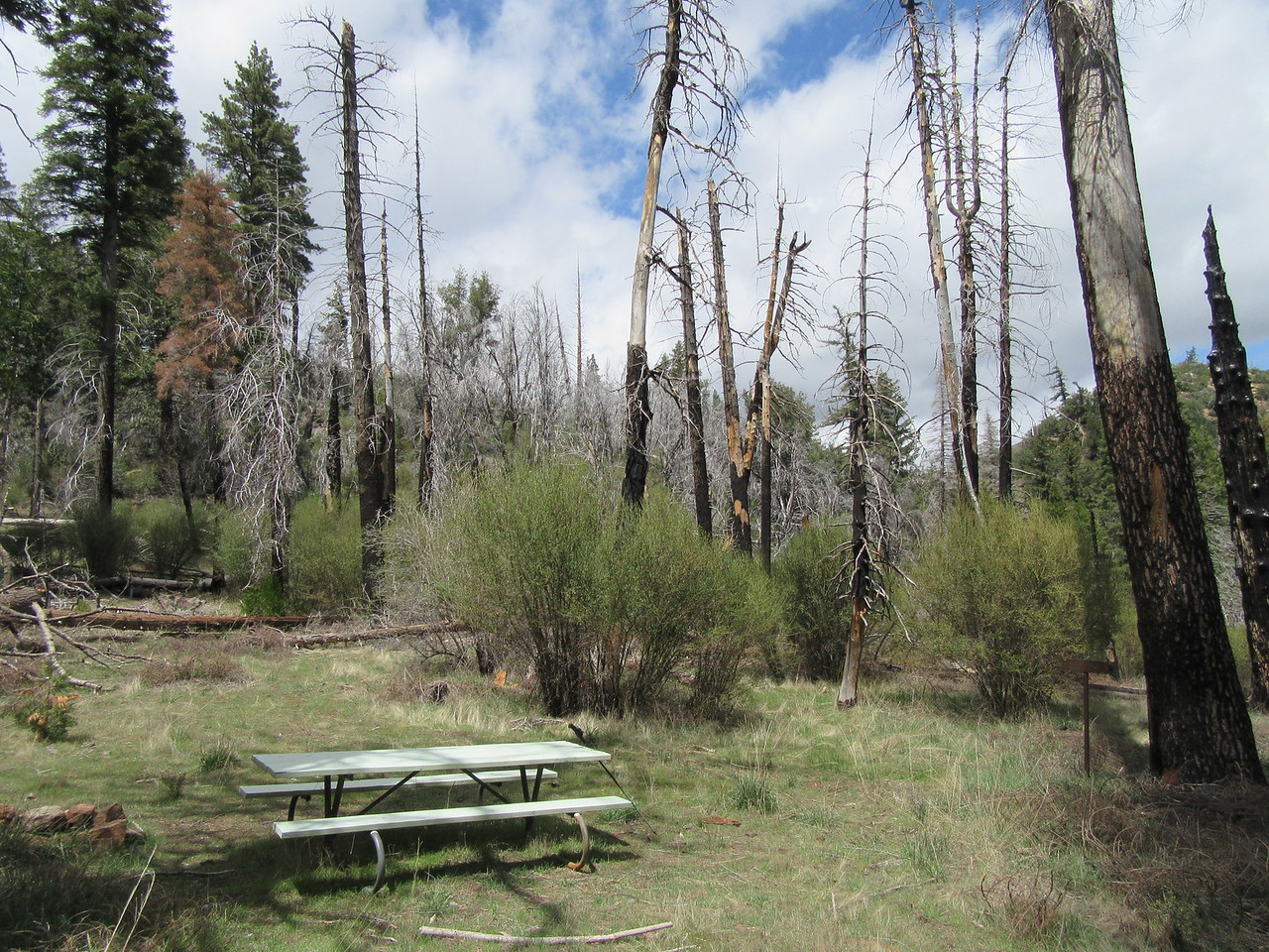 After a good climb, I arrived at Bear Camp (5138').  This use to be a great place to camp, but the Zaca fire killed many trees in the area which are now hazards doomed to ...