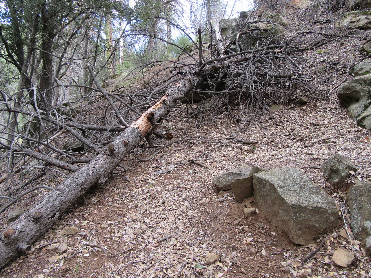 ... trees that did fall right where they should have, and ...