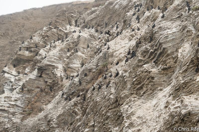Cormorant Cliff