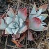 A few nice succulents