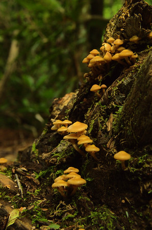 Great Smoky Mountains National Park 7/2014