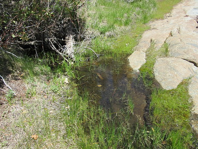 There was a little water flowing across the trail as I continued down to ...
