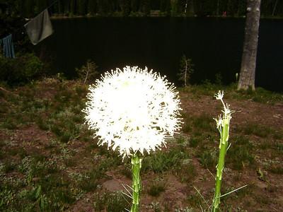 Beargrass Flower top.