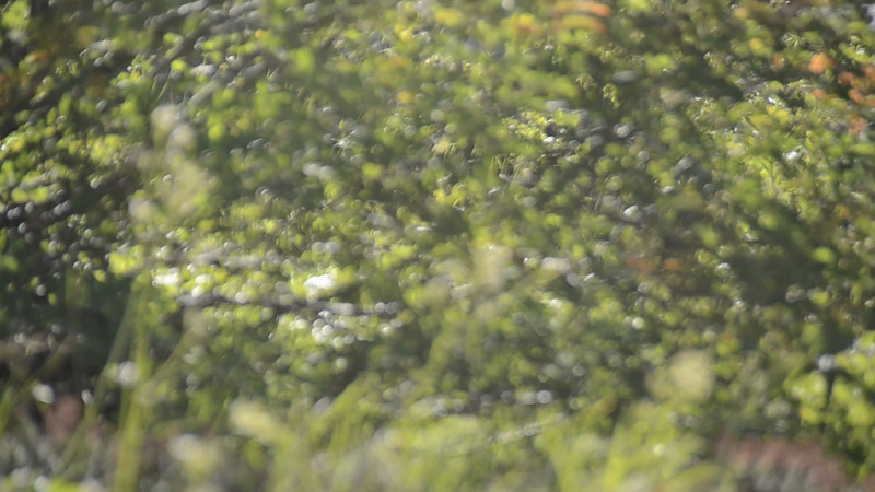 Not a great video, the sun was on my screen. But I had to capture the marmot whistling!