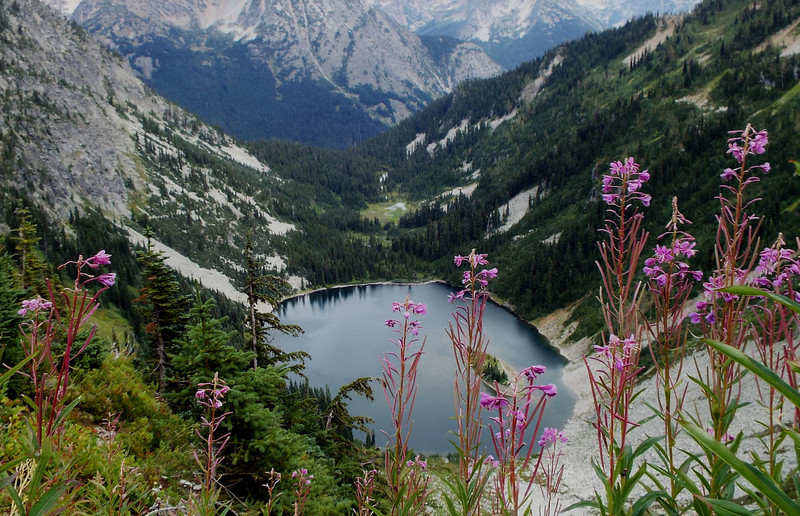 Onagraceae - <br /> Chamerion angustifolium - Fireweed<br /> Fireweed in front of Lake Ann