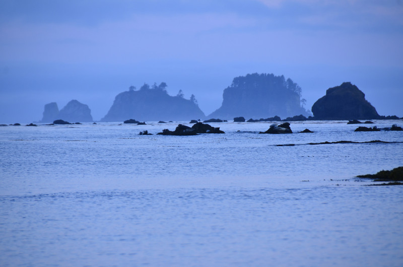 If you look closely, you can see the Harbor Seals crowded on the center rocks.