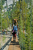 The hanging bridge in Woods Creek campground.