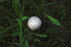 Who's looking for that golf ball?...yeah, we found it!..way...way up there..haha..