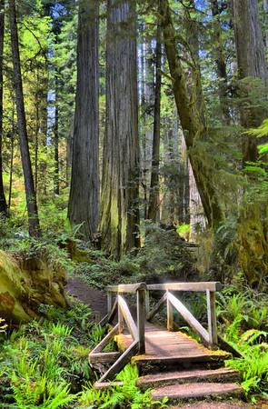Redwood Forest 5/2013